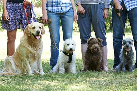 Group Animal Behavior Training Classes