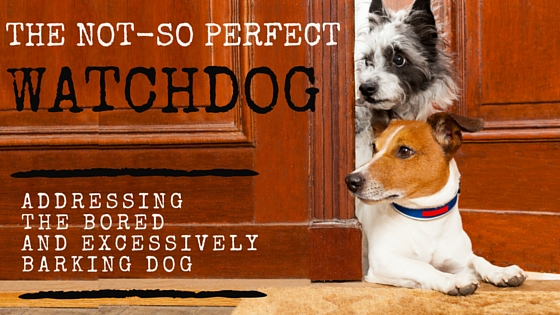 """The """"Not So"""" Perfect Watchdog"""