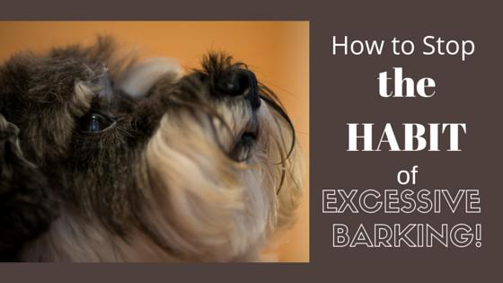 How to Break the Habit of Excessive Barking