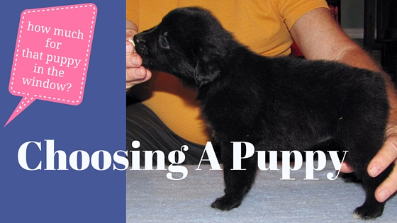 Choosing A Puppy: How To Make The Right Choice