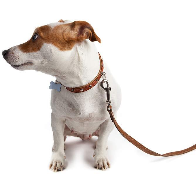 One on One Dog Training Classes Cleveland Akron Ohio