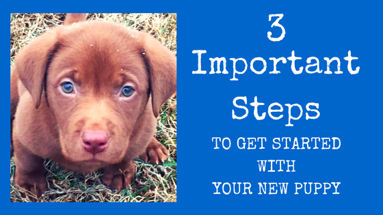Three Simple Steps To Get Started With Your New Puppy