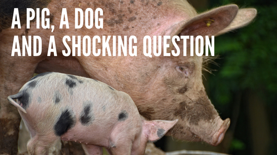 A Pig, A Dog and A Shocking Question
