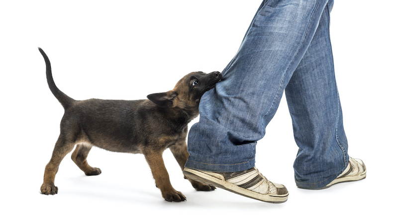 Puppy Training Course for Busy People